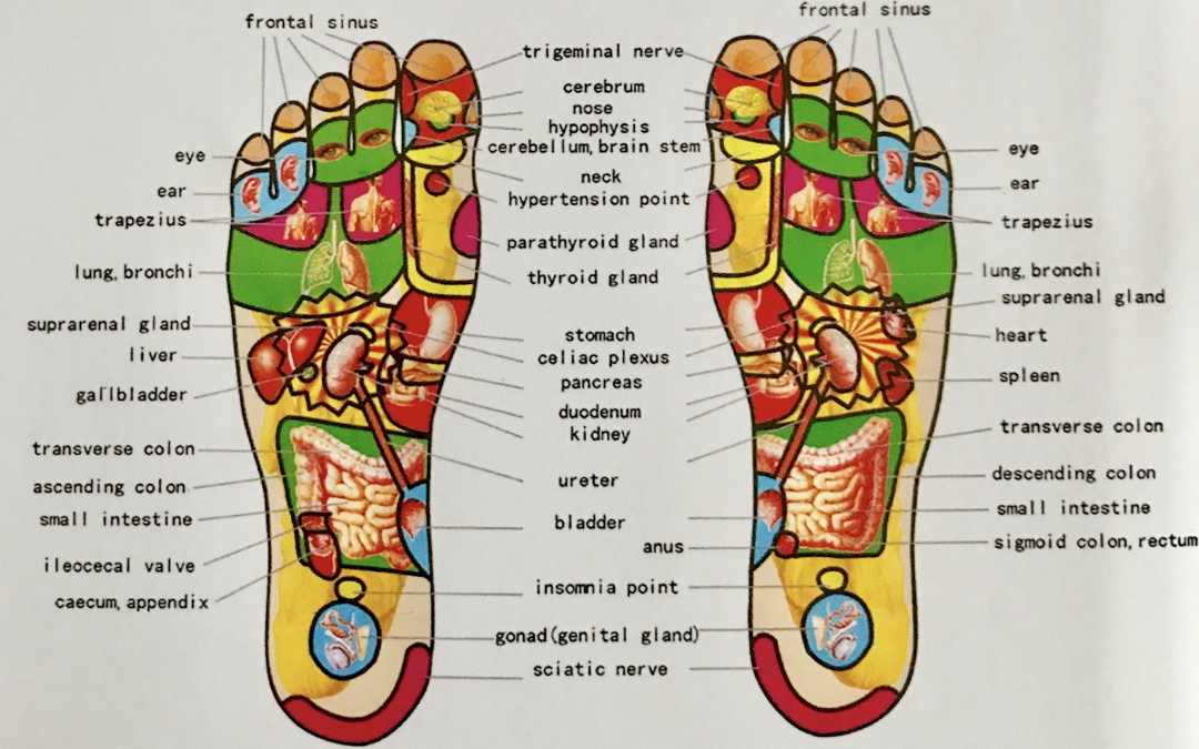Riflessologia Plantare: Riequilibrare il proprio corpo